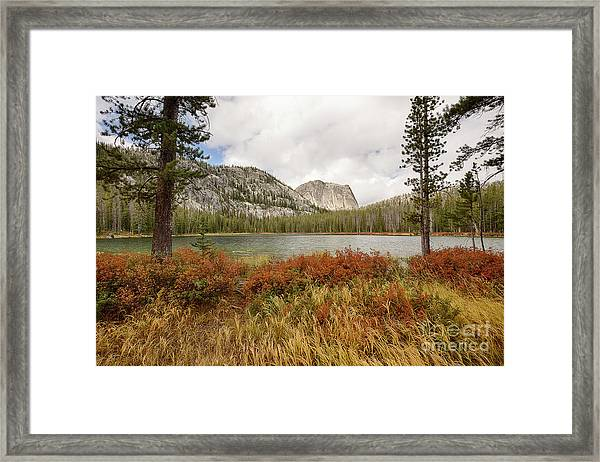 Yellowjacket Autumn Framed Print