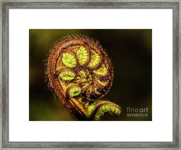 Young Fern Leaves Framed Print