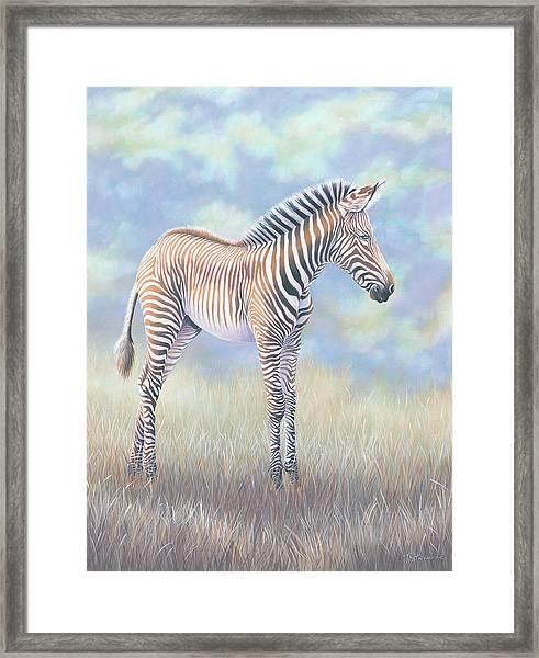 Young Grevy Zebra Framed Print