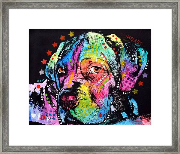 Young Mastiff Framed Print by Dean Russo Art