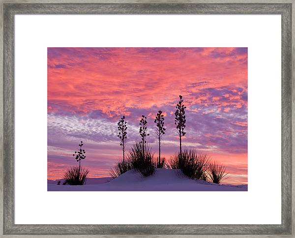 Yucca At Sunset In White Sands National Framed Print by Russell Burden
