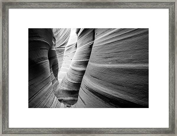 Zebra Black And White Framed Print by Johnny Adolphson
