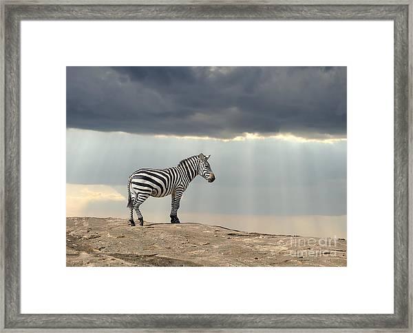 Zebra On Stone In Africa, National Park Framed Print