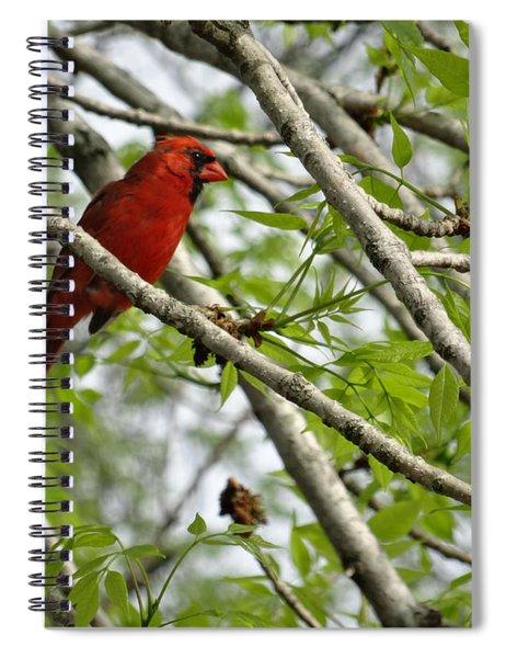 Cardinal Saturday Morning Spiral Notebook