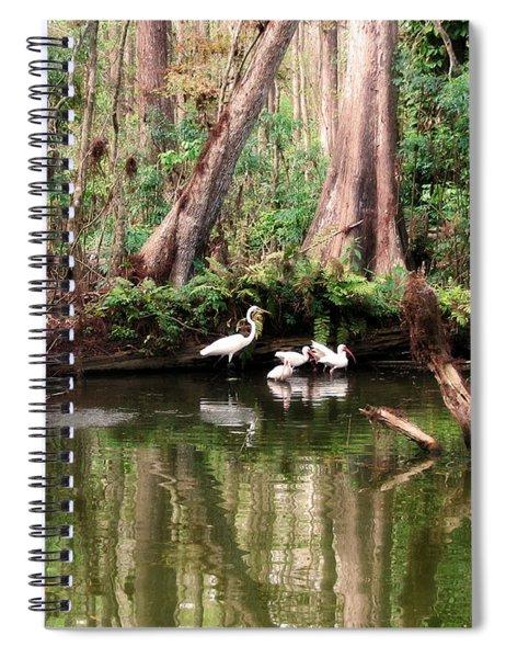 Cypress Swamp  Spiral Notebook