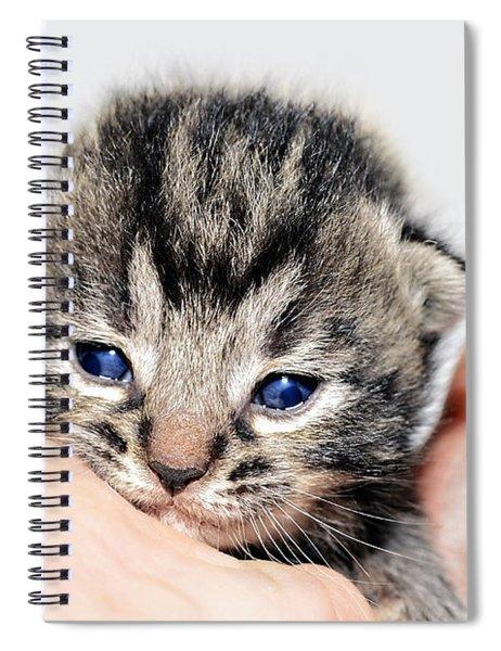 Kitten In A Hand Spiral Notebook