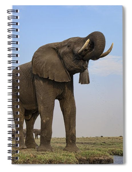 African Elephant Drinking Chobe River Spiral Notebook