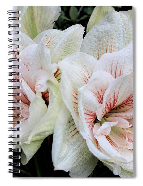 Amaryllis Cluster Spiral Notebook