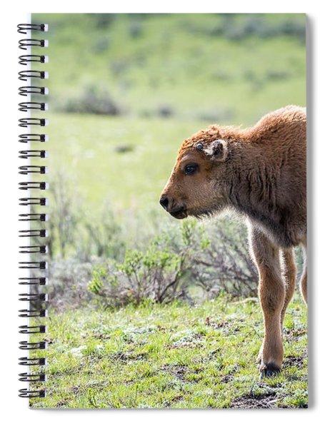 Bison Calf Spiral Notebook