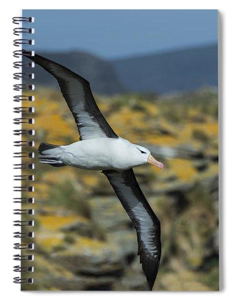 Black-browed Albatross, Falkland Islands Spiral Notebook