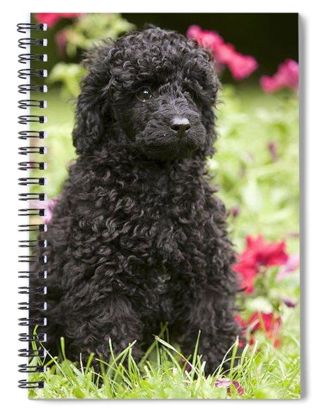 Black Poodle Spiral Notebook