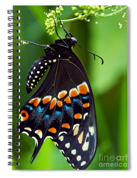 Black Swollowtail  Spiral Notebook