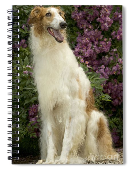 Borzoi Or Russian Wolfhound Spiral Notebook