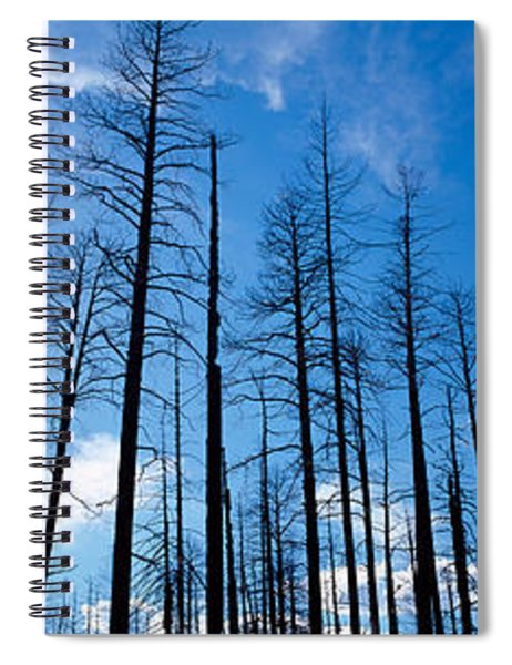Burnt Pine Trees In A Forest, Grand Spiral Notebook
