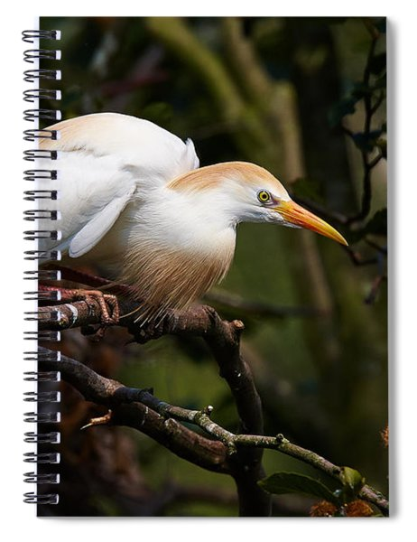 Cattle Egret In A Tree Spiral Notebook