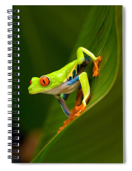 Close-up Of A Red-eyed Tree Frog Spiral Notebook