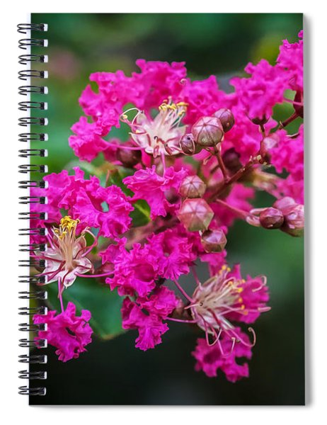 Crape Myrtles Tree Lagerstroemia Painted  Spiral Notebook