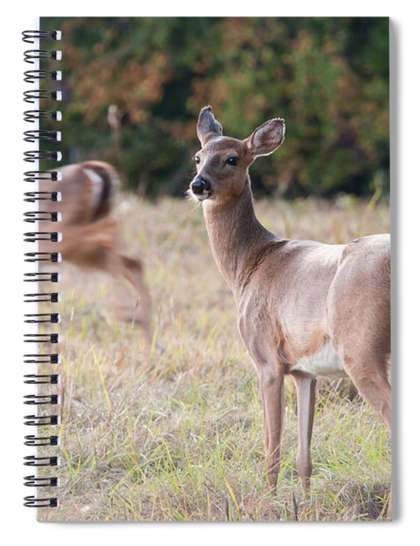 Deer At Paynes Prairie Spiral Notebook