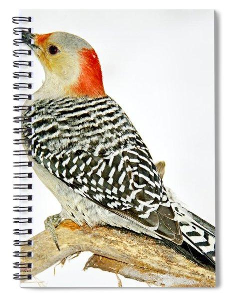 Female Redbellied Woodpecker In Winter Animal Portrait Spiral Notebook