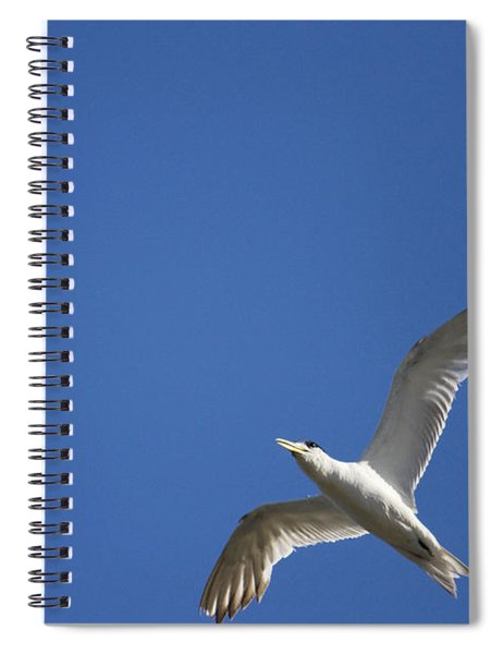 Flying Crested Tern Spiral Notebook