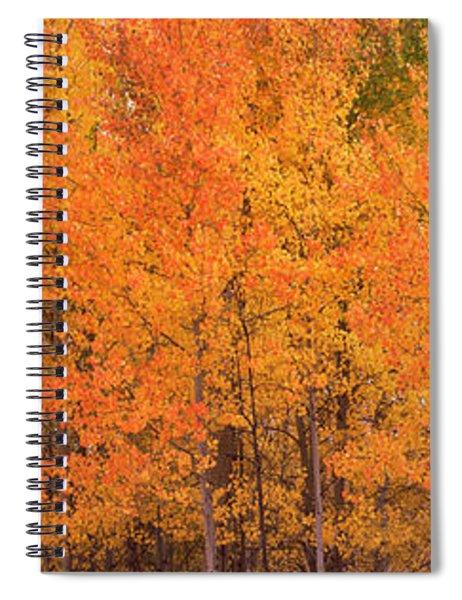 Forest, Jackson, Jackson Hole, Teton Spiral Notebook