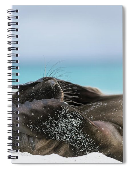 Galapagos Sea Lion Pup Covering Face Spiral Notebook