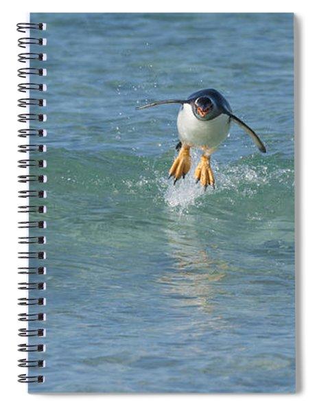 Gentoo Penguin Porpoising Spiral Notebook