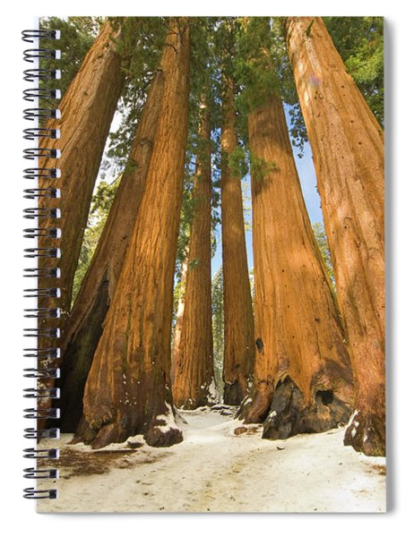Giant Sequoias Sequoia N P Spiral Notebook by Yva Momatiuk John Eastcott