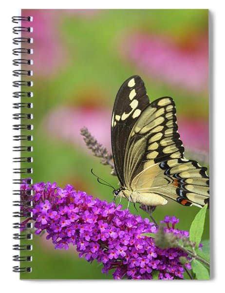 Giant Swallowtail Butterfly Papilio Spiral Notebook