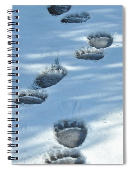 Grizzly Bear Tracks Spiral Notebook