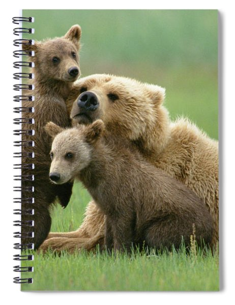 Grizzly Cubs Play With Mom Spiral Notebook