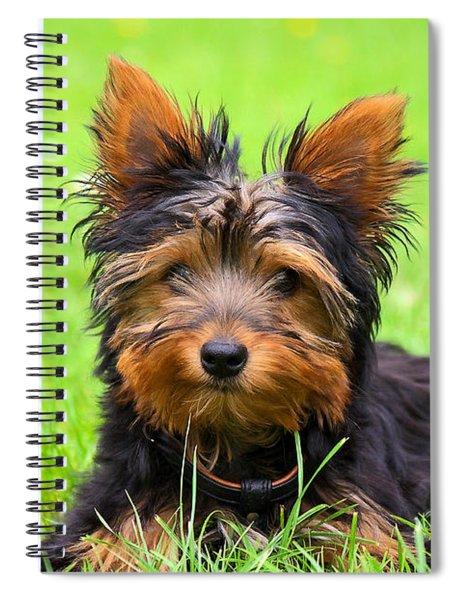 Hello Toby Spiral Notebook