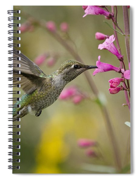 Hummingbird Heaven  Spiral Notebook