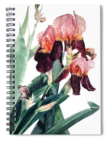 Watercolor Of A Pink And Maroon Tall Bearded Iris I Call Iris La Forza Del Destino Spiral Notebook