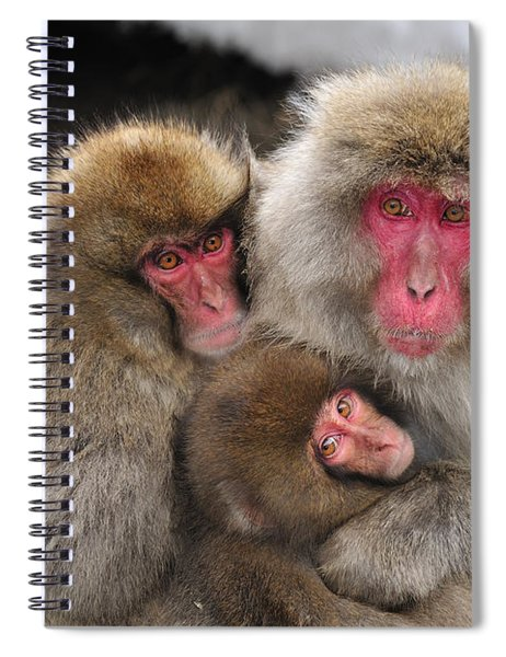 Japanese Macaque Mother With Young Spiral Notebook
