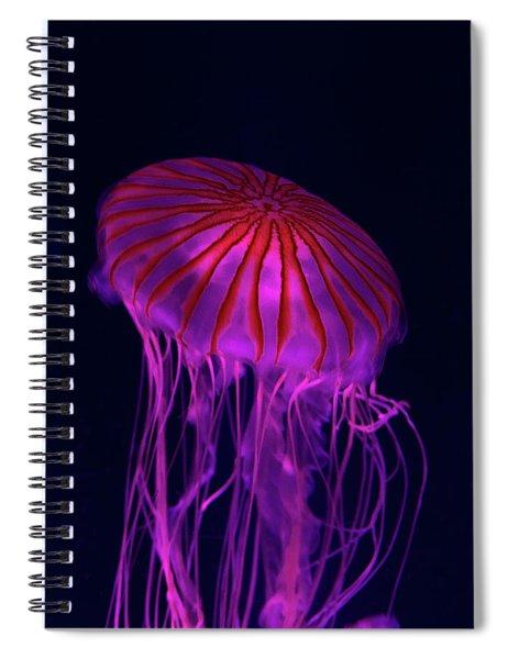 Jellyfish In Aquarium Of Quebec Spiral Notebook