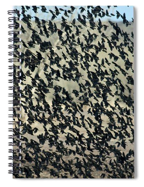 Large Flock Of Blackbirds And Cowbirds Spiral Notebook
