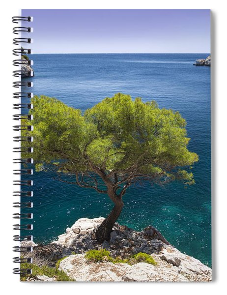 Spiral Notebook featuring the photograph Lone Pine Tree by Brian Jannsen