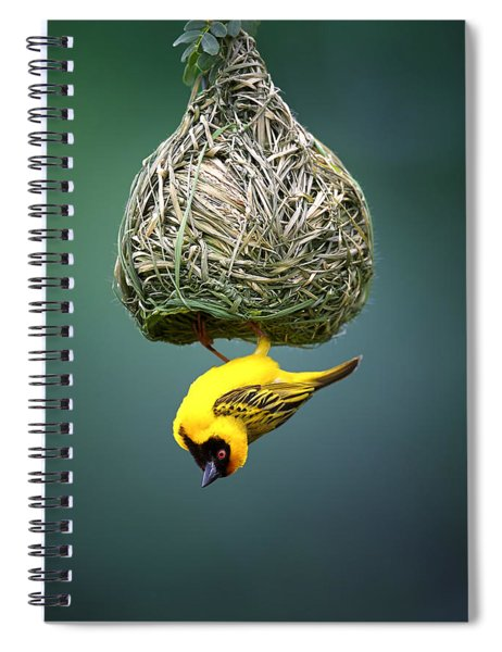 Masked Weaver At Nest Spiral Notebook