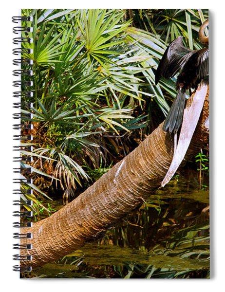 Oriental Darter Anhinga Melanogaster Spiral Notebook