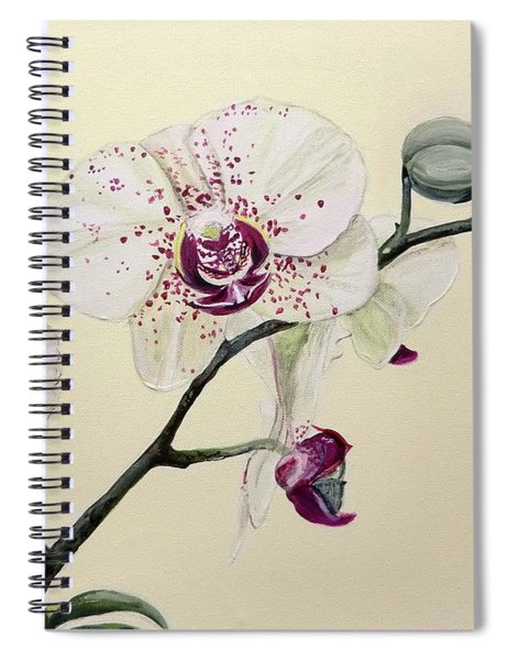 Phalaenopsis Black Panther Orchid Spiral Notebook