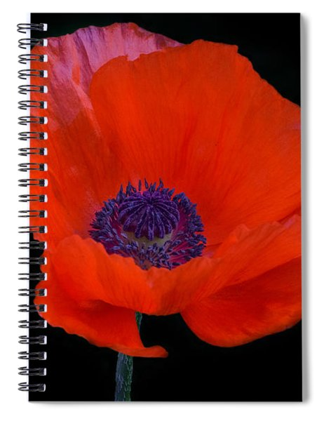 Spiral Notebook featuring the photograph Poppy  by Garvin Hunter