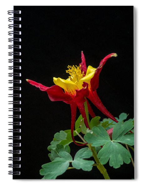 Red And Gold Columbine 2 Spiral Notebook