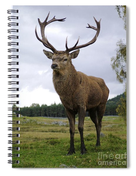 Red Deer Stag Spiral Notebook
