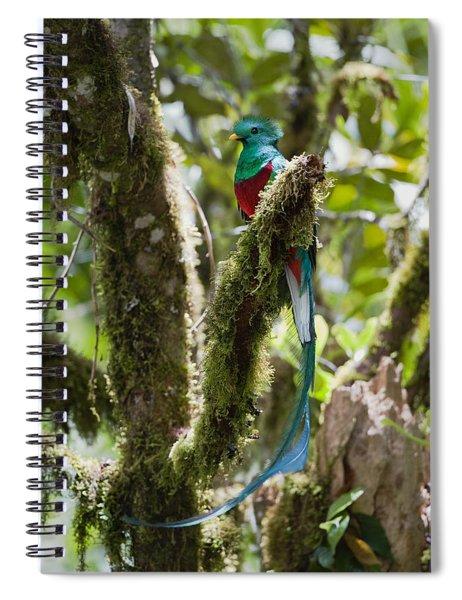 Resplendent Quetzal Male Costa Rica Spiral Notebook