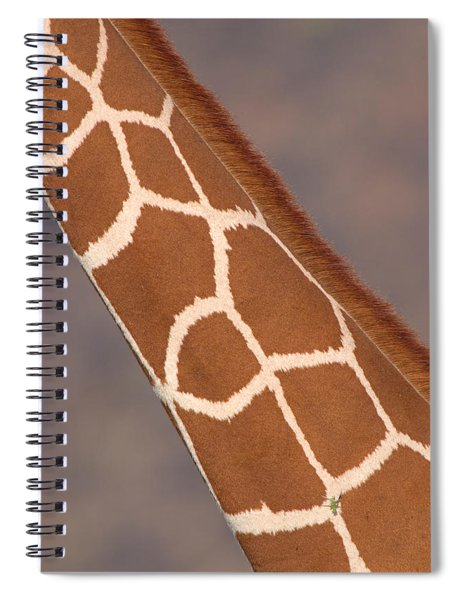 Reticulated Giraffe Giraffa Spiral Notebook