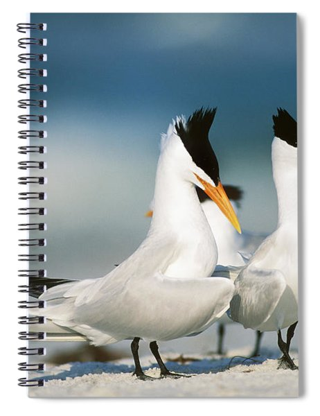 Royal Terns Spiral Notebook