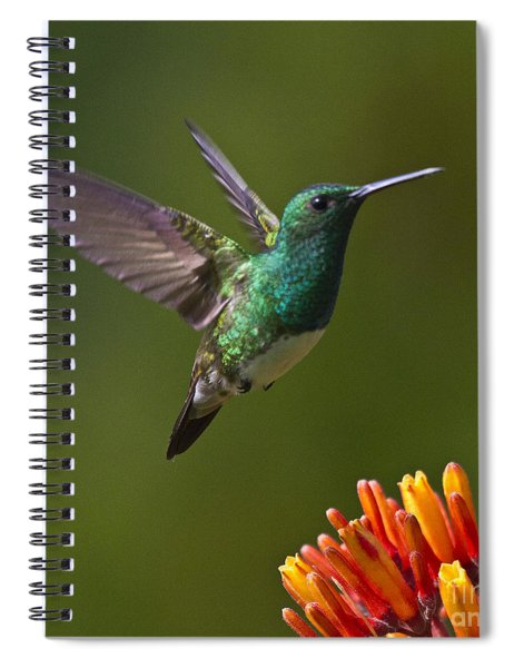 Snowy-bellied Hummingbird Spiral Notebook