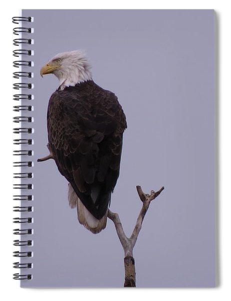 Solo  Bald Eagle Spiral Notebook