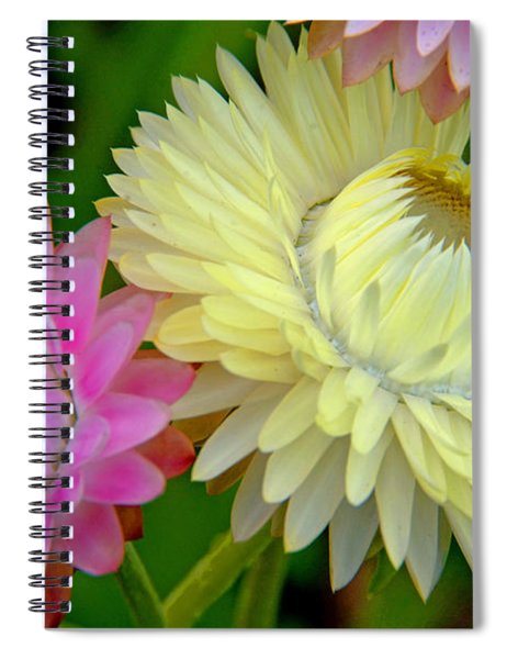 Strawflower Blossoms Spiral Notebook